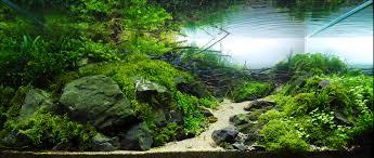 fish tank planted aquarium aquascaping love substrate light bulbs