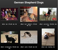 German Shepherd Memes - german shepherd dogs meme by kaohzwolf on deviantart