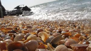 shell tag wallpapers shell shells ocean sky summer nature sun