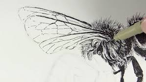 drawn wings pen and ink pencil and in color drawn wings pen and ink