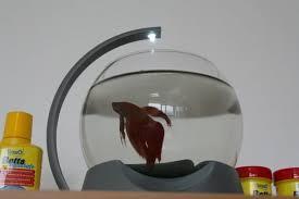 aquarium bureau avoir un aquarium au bureau le test