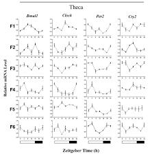 rhythmic expression of circadian clock genes in the preovulatory