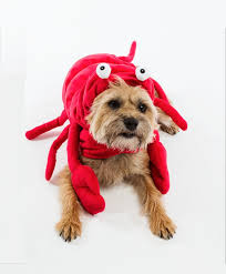 Dog Halloween Costumes 27 Halloween Dogs Images Dog Costumes Dog