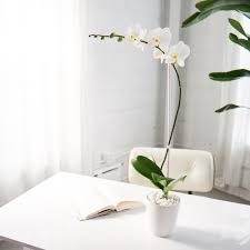 orchid arrangements orchid arrangement classic white with white orchid orchid