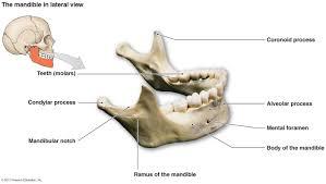Anatomy Of The Human Body Bones The Skeletal System