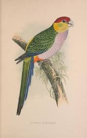 863 best ipotesi pittura images on pinterest parrot animals and
