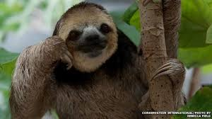 4 toed sloth the who lost a and gained 200 sloths news