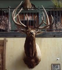 Antler Home Decor Elk Heads Elk Antlers And Elk Mounts Are Here Rustic Home
