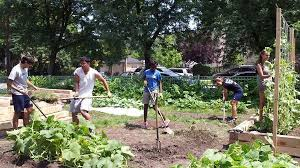 agriculture projects for students urban agriculture institute of environmental sustainability