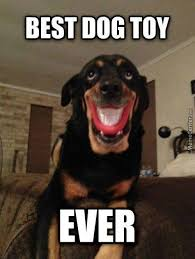 Dog Smiling Meme - dog smiling meme 28 images my owner forced me to smile now i can