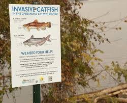 chesapeake bay native plants conservation u2014 wide net project