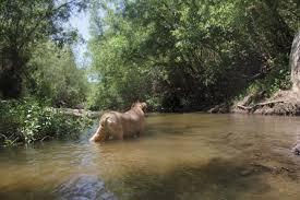 California wild swimming images Swimming hole wilderbliss jpg