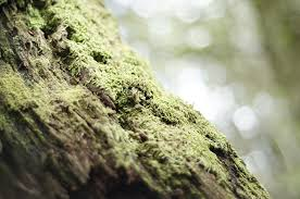 moss on tree domain free photos for 2516x1667