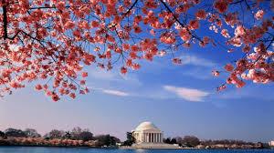 bbc travel cherry blossoms around the world