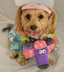 Tacky Tourist Halloween Costume Troll Poppy Trolls Movie Halloween Costumes Dogs