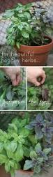 Herb Grower S Cheat Sheet Best 25 Healthy Herbs Ideas On Pinterest Natural Healing
