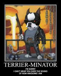 Boston Terrier Meme - boston terrier memes here is why i pawsitively love boston terrier