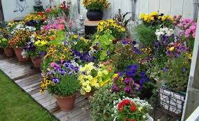 container gardening designs for small space with pots container