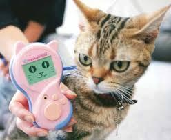 Gadgets For Pets Gadgets For Pets Gadget World