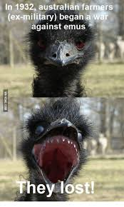Ostrich Meme - ostrich memes 100 images animal capshunz ostriches funny animal