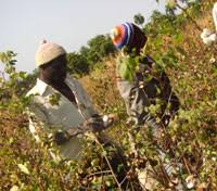 siege de l omc rfi economie l afrique grande perdante de l omc