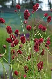 fabulous mix of ornamental grasses and other perennials 1325