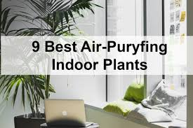Air Purifying Plants 9 Air by 9 Best Air Purifying Indoor Plants Servicemaster Office Cleaning