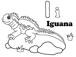 iguana coloring page realisitc green iguana coloring page free