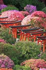 japan flower festivals not to be missed this spring u2013 travel with
