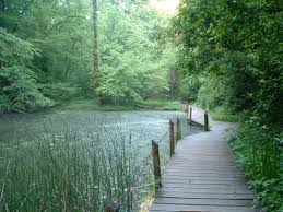 Tennessee nature activities images Fun things to do in knoxville tn with kids trekaroo png