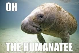 Animal Pun Meme - 17 of the best animal puns to make your day