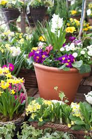 create and grow with squire u0027s garden centre u2022 capture by lucy