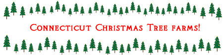 ct christmas tree farms the best places activities and fun for