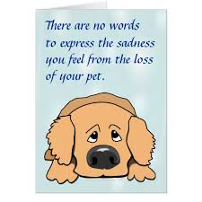 sad pet sympathy card for loss of pet zazzle