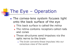What Structure Of The Eye Focuses Light On The Retina Chapter 25 Optical Instruments Ppt Download