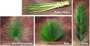 palm for palm sunday palms for palm sunday