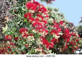 Madeira Flowers - beautiful exotic flower on madeira island portugal stock photo