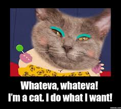 I Do What I Want Meme - whateva whateva i m a cat i do what i want memes com
