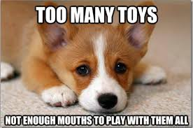 First World Problems Memes - funny memes first world dog problems dumpaday 4 dump a day