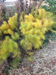 native plants in illinois fall