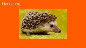 british native plants great british native animals youtube