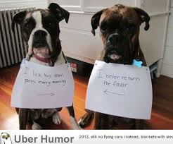 Funny Boxer Dog Memes - funny animal pictures brindel boxer puppy picsgalary