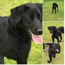black dog rescues home facebook