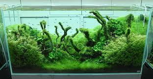 japanese aquarium decoration japanese aquarium nature aquariums and aquascaping