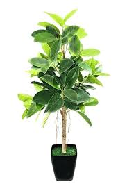 best low light house plants tall houseplants for low light low light indoor plants best low
