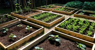 best vegetable garden design home design ideas
