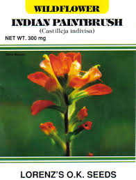 indian paintbrush flower seeds for indian paintbrush flower castilleja indivisa