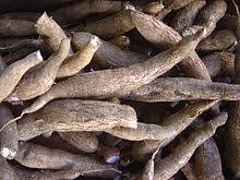 A Root Vegetable - list of root vegetables wikipedia