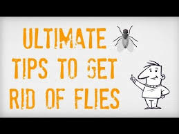 How To Get Rid Of Mosquitoes In My Backyard Ultimate Tips On How To Get Rid Of Flies Getting Rid Of Flies