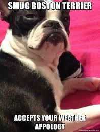 Boston Terrier Meme - smug boston terrier accepts your weather appology smug terrier